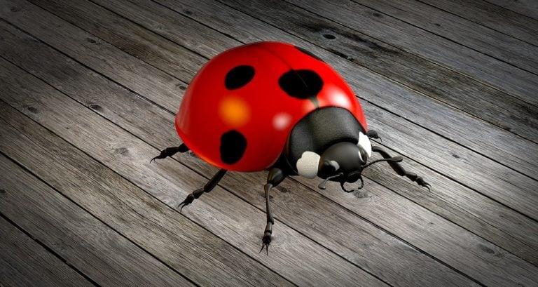 Ladybug Spirit Animal Symbolism and Dreams