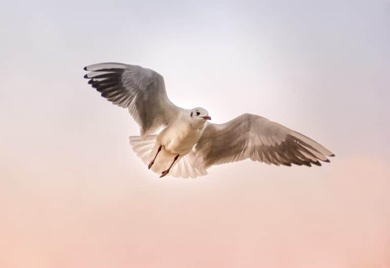 Seagull Spirit Animal Symbolism and Dreams